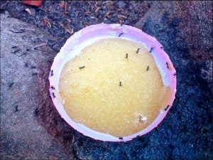 how to make an ant trap without borax