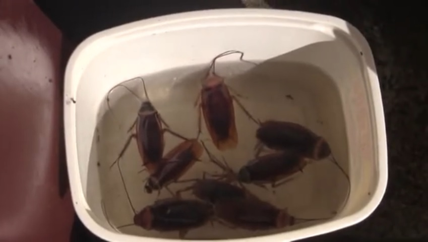 Instant DIY Homemade Roach Traps for Free!
