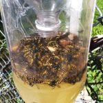 homemade-wasp-trap