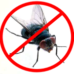 homemade-fly-repellent