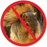 homemade-squirrel-repellent