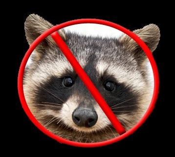 homemade-raccoon-repellent