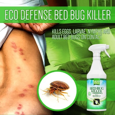 Home Made Bed Bug Spray Reviews Organic Treatments