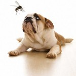 natural-mosquito-repellent-dogs