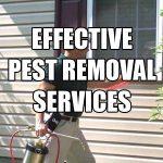 pest-removal-service-cheap