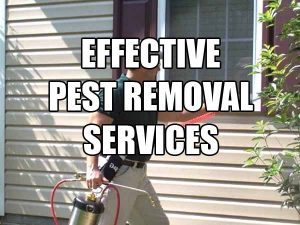 effective pest removal service