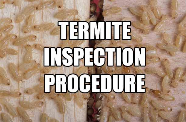 termite-inspection-cost-diy-procedure