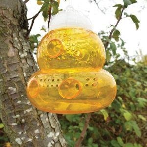 seicosy trap bees