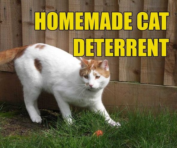Cat Deterrent Spray Quick Remedy For House And Yard